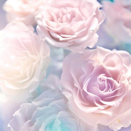 Нежные розовые розы крупным планом