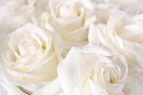 Красивый фон из белых роз крупным планом