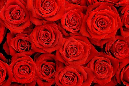 Большой букет красных роз крупным планом в виде цветочного фона