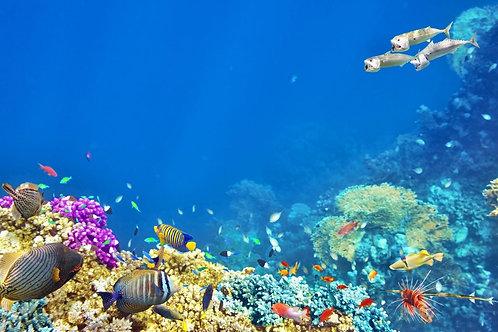 Живописный подводный мир с тропическими рыбами и кораллами
