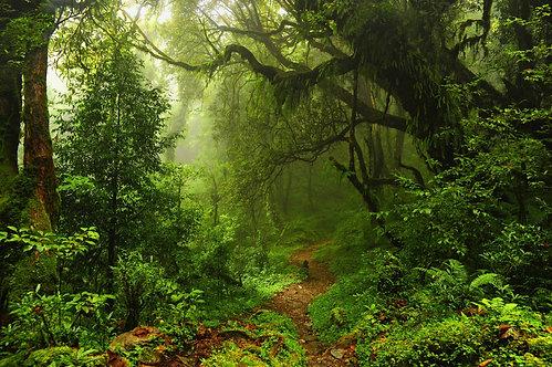 Субтропический лес в Непале
