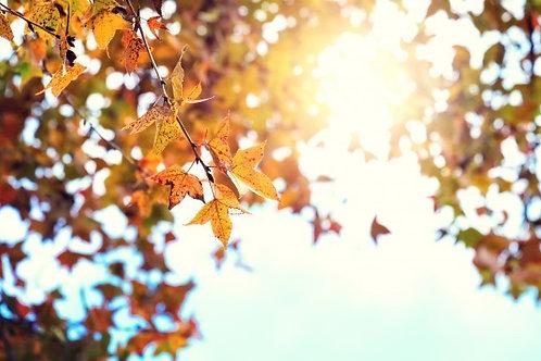 Фотообои. Фрески. Картины. Осенние листья. Небо. Солнечные лучи. Природа. Пейзаж