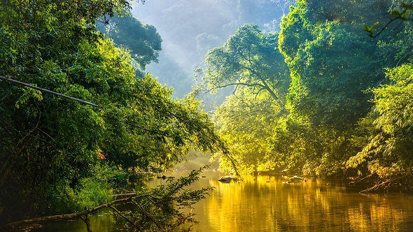 Джунгли и река в тропическом лесу