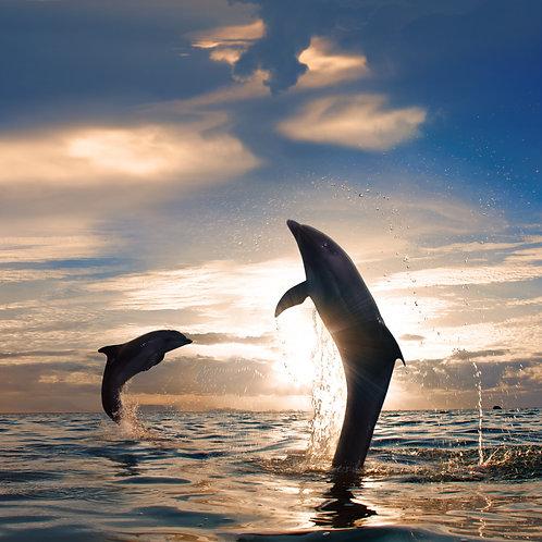 Розовый закат в море и два красивых дельфина, прыгающих из воды