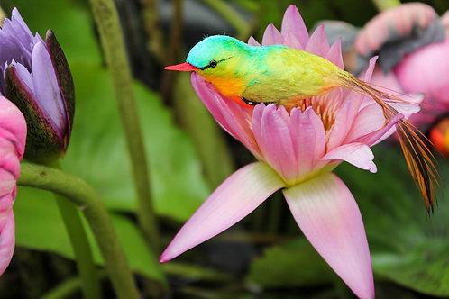 Райская птичка в цветке