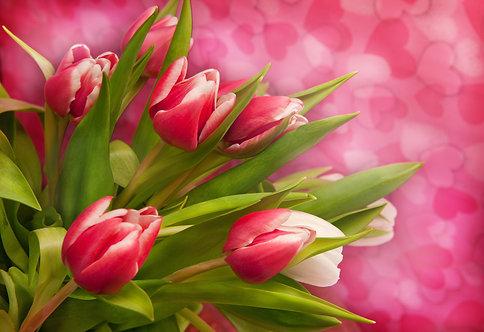 Букет розовых тюльпанов на размытом розовом фоне