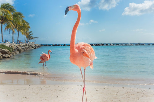 Изящный одинокий розовый фламинго на пляже