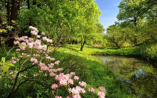 Фотообои. Фрески. Картины. Пруд. Рододендрон. Природа и пейзажи. Сады и парки