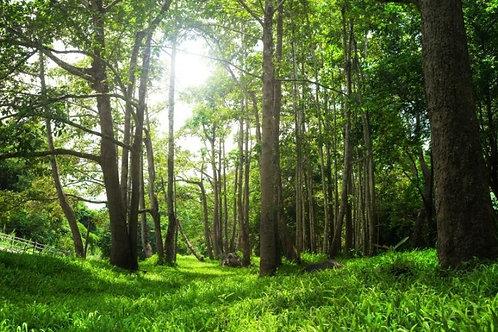 Солнечный летний лес в Таиланде