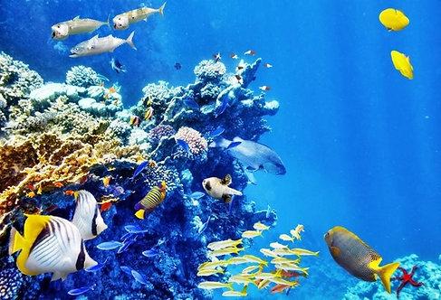 Завораживающий подводный мир с кораллами и тропическими рыбами