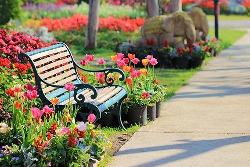 Винтажная скамья в саду с тюльпанами