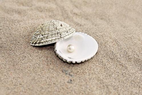 Жемчуг в раковине на песке