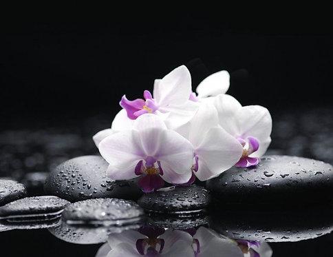 Черные камни и ветка белой орхидеи с каплями воды