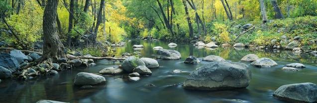 Ручей в хвойном каньоне - Седона, Аризона | #103372226