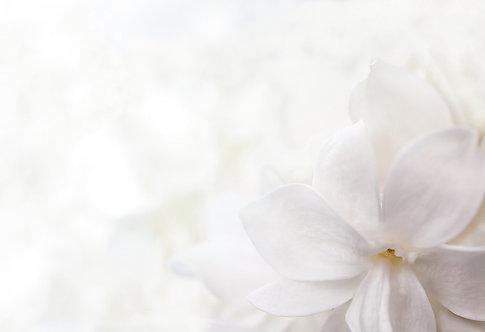 Белый фон из цветов сирени крупным планом