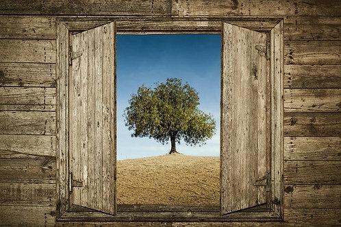 Вид из открытого окна на дерево в поле