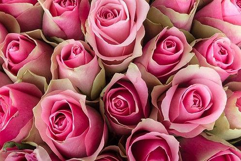 Розовые розы в виде цветочного фона