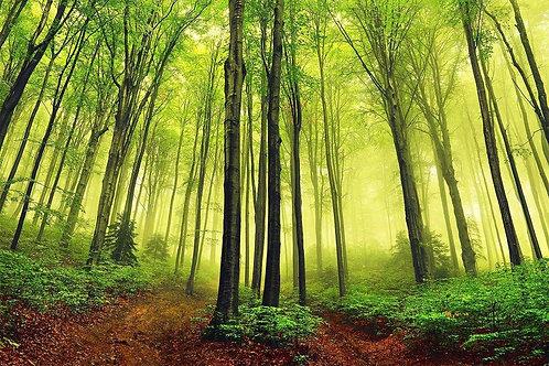 Летний туманный лес