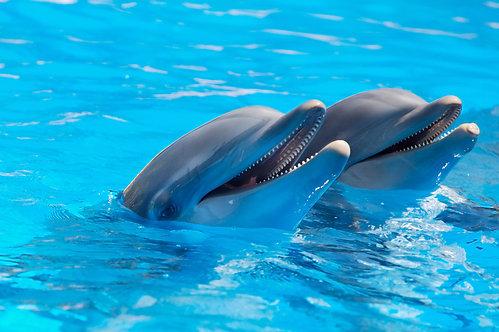 Счастливые дельфины в голубой воде