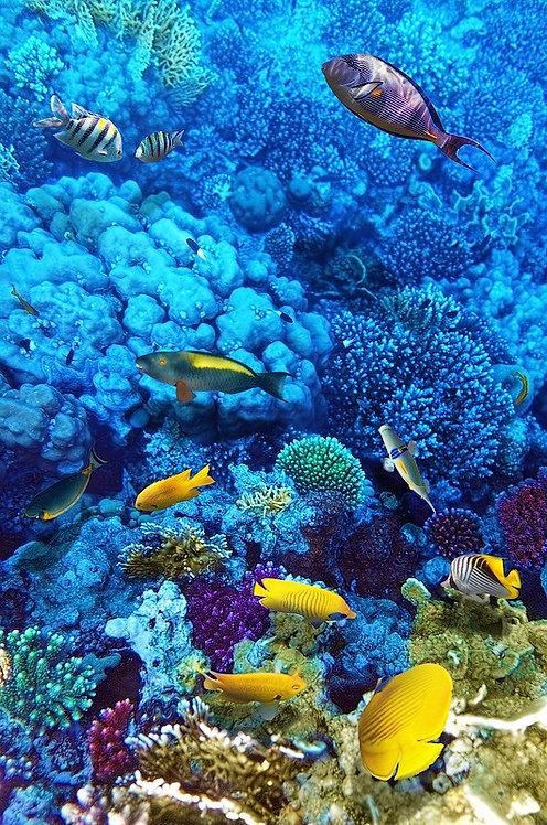 Кораллы и рыбы в Красном море - Египет, Африка