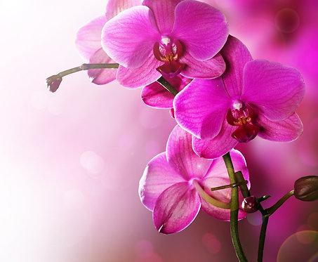 Ветка с розовыми цветами орхидеи крупным планом