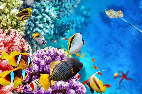 Великолепный подводный мир с кораллами и тропическими рыбами