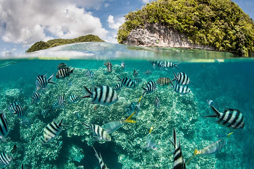 Подводный мир мелководья в Палау