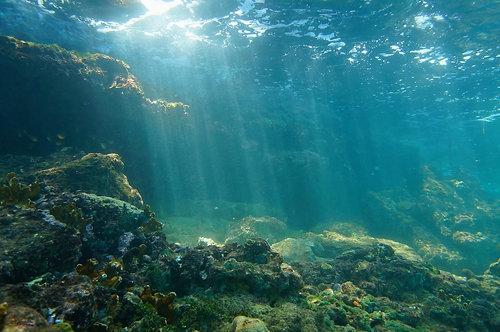 Вид с морского дна на риф Карибского моря