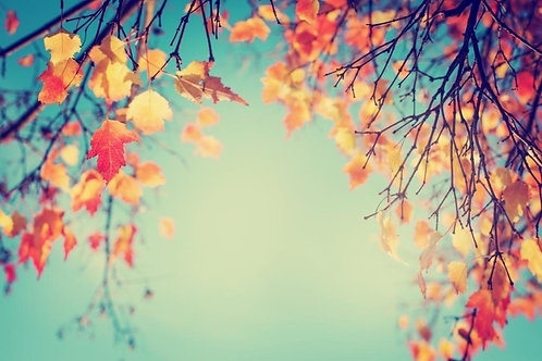 Фотообои. Фрески. Картины. Осенний парк. Листва. Небо. Природа и пейзажи
