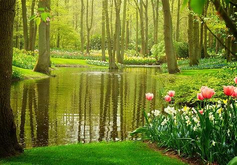 Фотообои. Фрески. Картины. Парк цветов Кёкенхоф. Тюльпаны. Пруд. Природа. Пейзаж