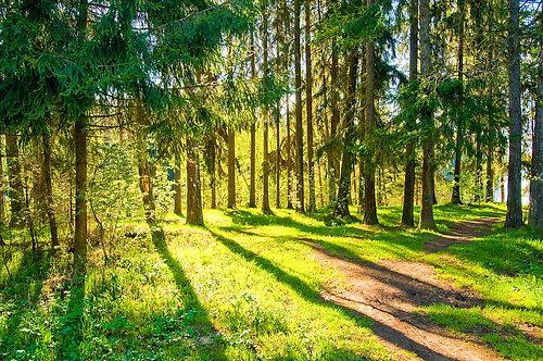 Весенний лесной пейзаж