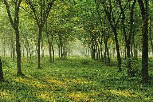 Природный пейзаж с лесной аллеей в тумане