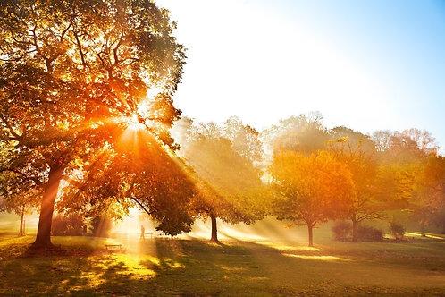 Фотообои. Фрески. Картины. Осенний парк. Закат. Листва. Деревья. Природа. Пейзаж