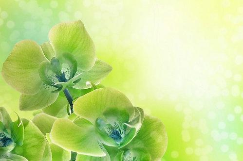 Зеленые цветы орхидеи на размытом фоне
