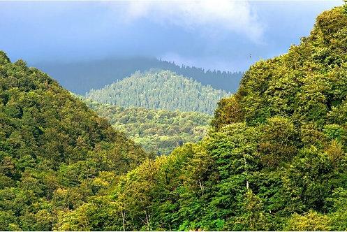 Пейзаж с горным лесом в лучах солнца в середине лета