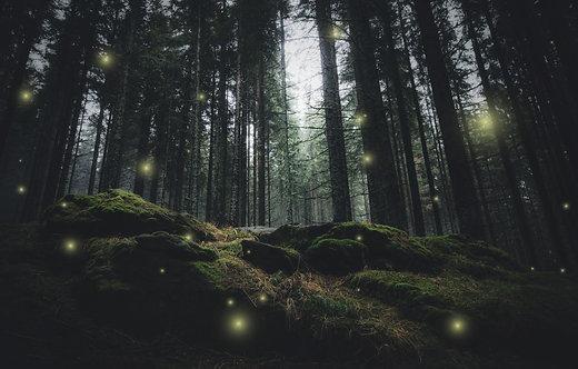Волшебные огоньки в таинственном дремучем лесу