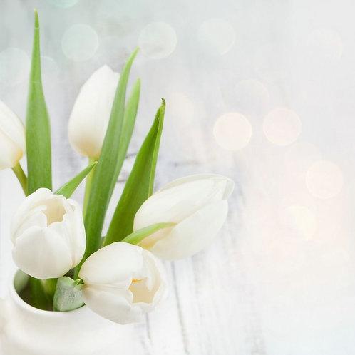Букет из белых тюльпанов с зелеными листьями на белом фоне