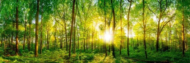 Лесная панорама с солнечным светом | #418429123