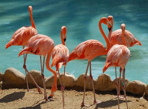 Шесть розовых фламинго на песчаном берегу озера