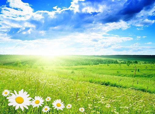 Поле с ромашками и живописное небо