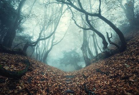 Тропа сквозь таинственный лесной туман осенним утром в Крыму