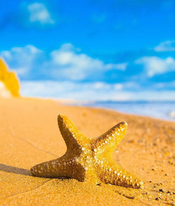 Звезда упала с небес на пляж