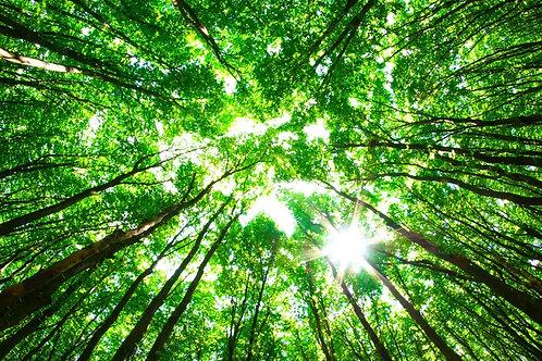 Вид снизу на зеленые кроны солнечного летнего леса