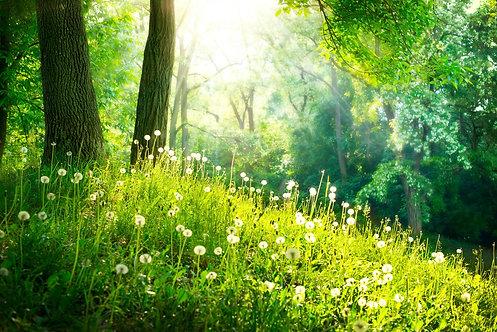 Пейзаж с весенней природой в парке с зеленой травой и деревьями