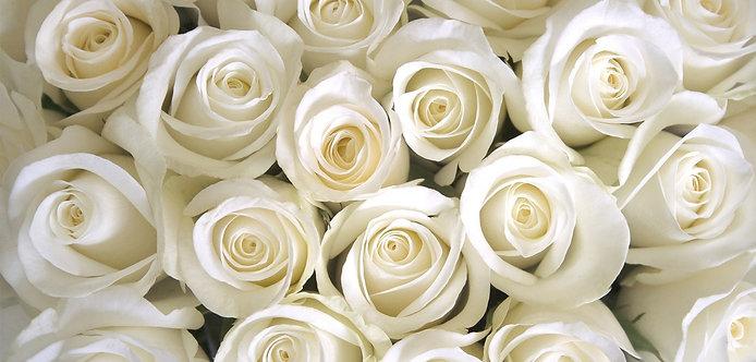 Цветочный фон из белых роз