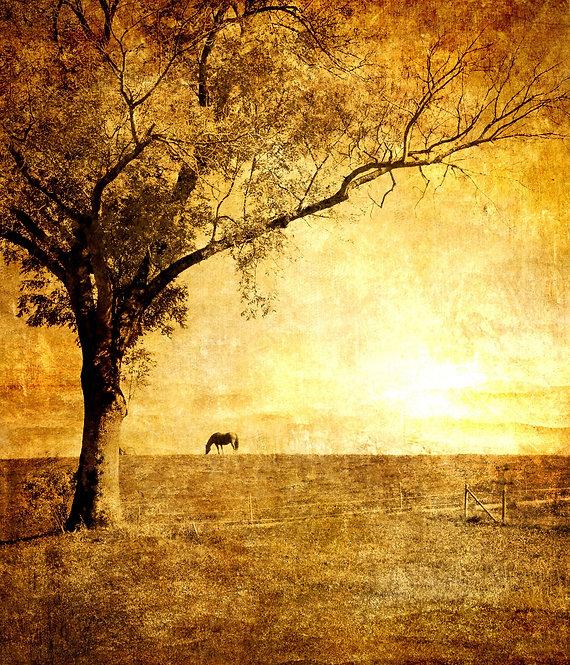 Одинокое дерево на фоне золотого заката в винтажном стиле