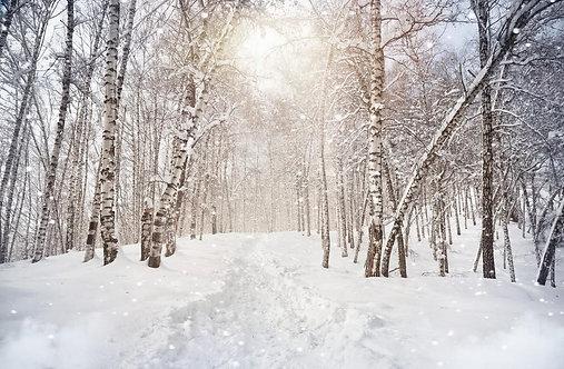 Березовый лес зимой и снегопад в горах Казахстана