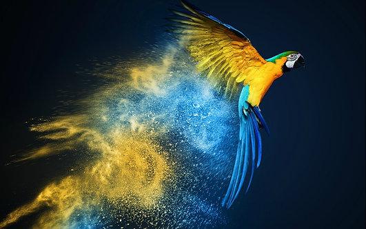 Попугай в полете в разноцветных брызгах