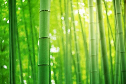Зеленые заросли бамбукового леса в Японии крупным планом