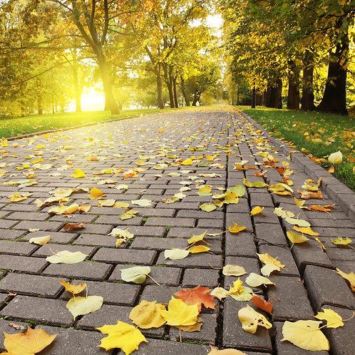Фотообои. Фрески. Картины. Дорожка в парке. Закат. Листва. Осенний пейзаж